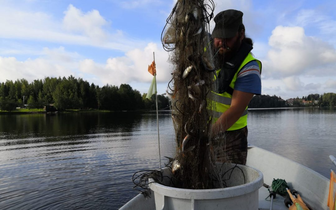 Veikkolan Kalljärvellä tehokalastetaan
