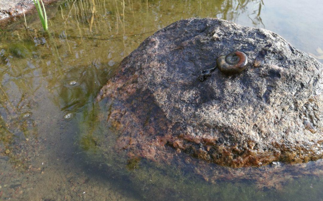 Ny bedömning av ytvattnens ekologiska tillstånd i Finland