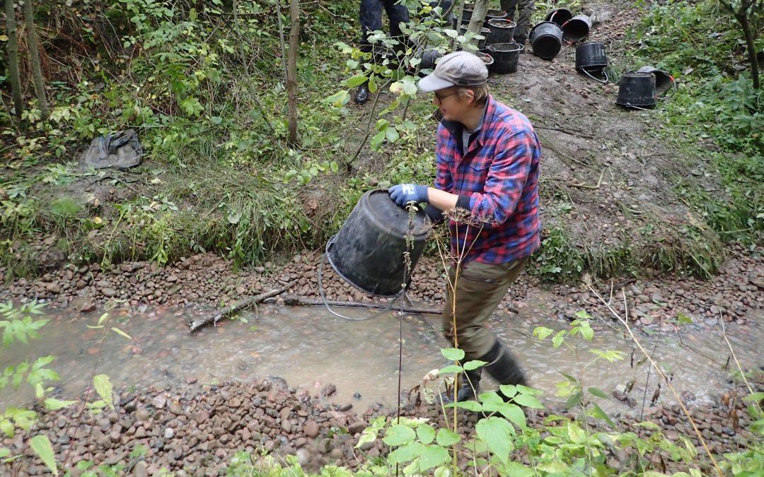 Siuntionjoki 2030 -hankkeen purokunnostustyö on aloitettu – tule mukaan seuraamaan taimenen kudun onnistumista!
