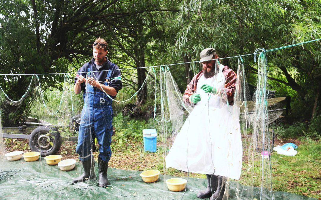 Kyrkslätt-Sjundeå fiskeområde, Sjundeå å 2030-projektet och LUVY uppgör fiskeområdets bruks- och skötselplan som ett samarbete