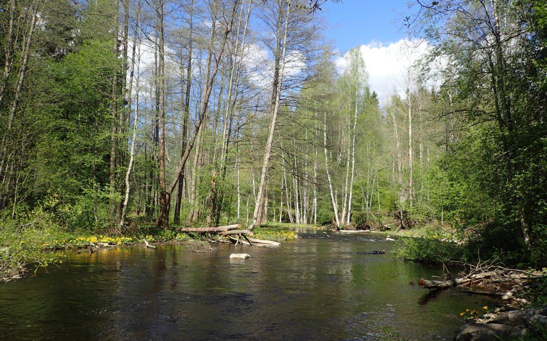 Vattendragen inom Högfors stads område – ett öppet publiktillfälle 5.11. kl. 18–20, Karkkilasali