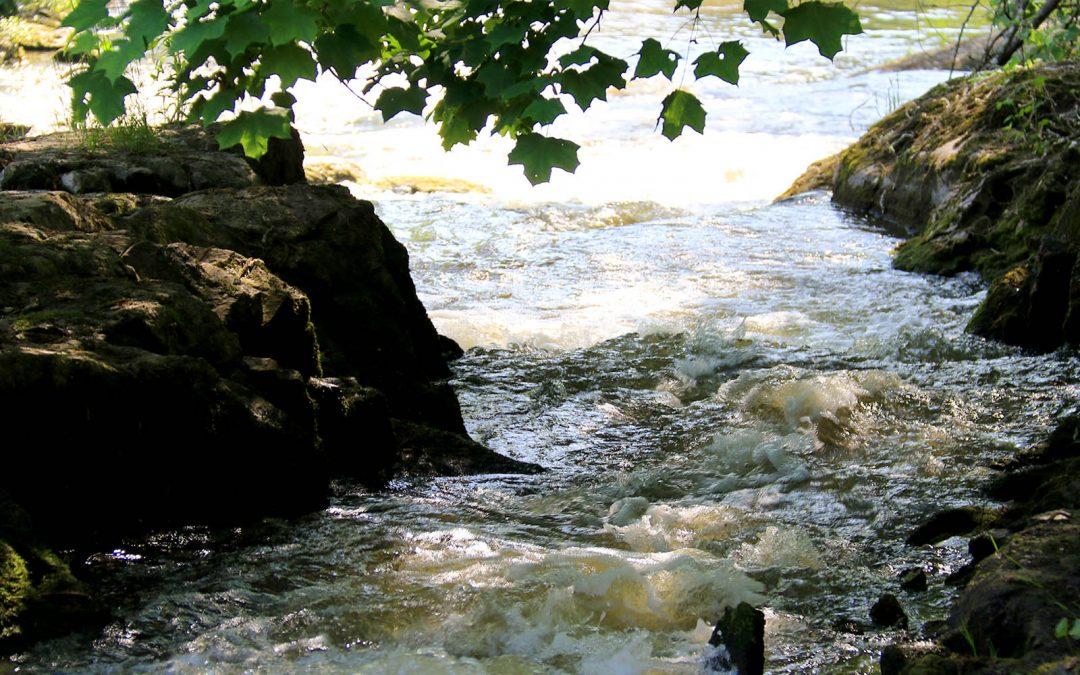 Aquarius: Alueelliset vesiensuojeluyhdistykset vesiluonnon tuntijoina