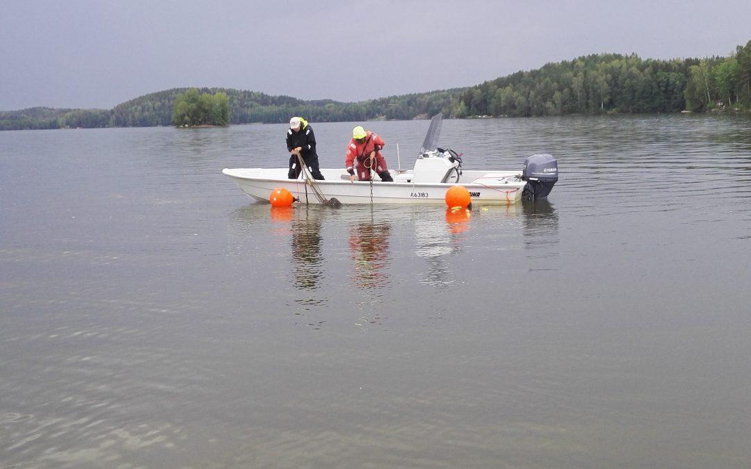 Fiskbeståndet i Hiidenvesi sjö undersöktes under sommaren – såväl gösstammen som karpfiskstammarna är rikliga