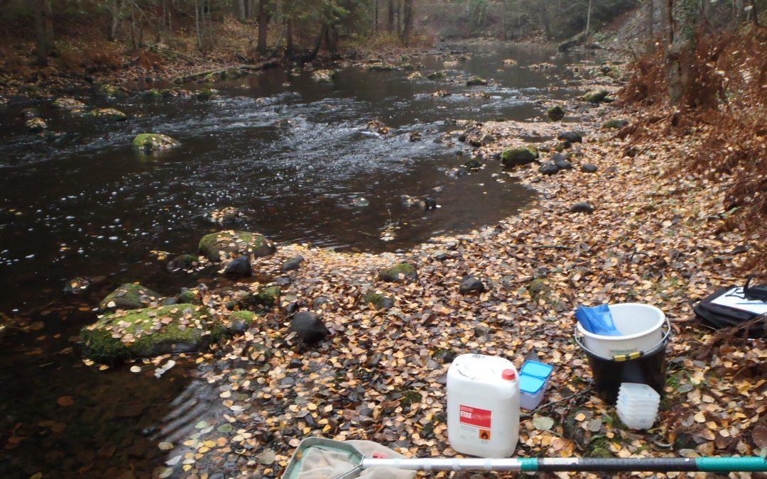Inga större förändringar i Hiidenvesi sjös tillstånd – de milda vintrarna ökar belastningen