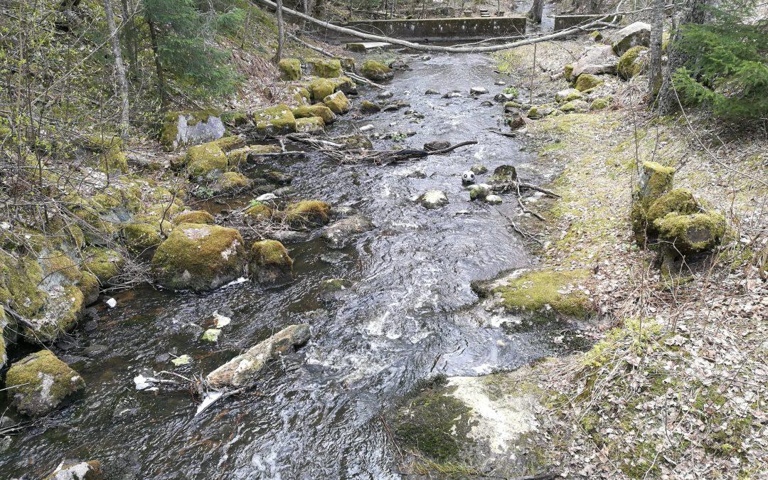 I Veikkola vattendragsprojektet restaurerar man Lamminoja-bäcken samt intensivfiskar i Kalljärvi sjö