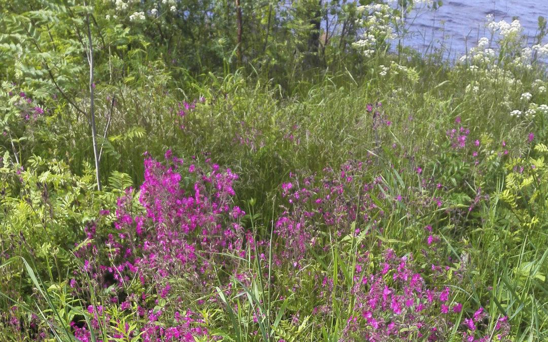 Vattendragsvänliga trädgårdskötselsbroschyrer och nätsidor guidar till en mer ansvarsfull trädgårdsskötsel