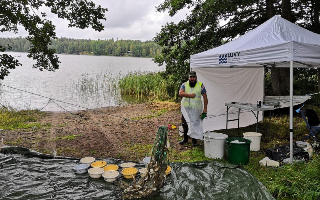 Veikkolan vesistöhankkeessa hoitokalastetaan Kalljärvellä