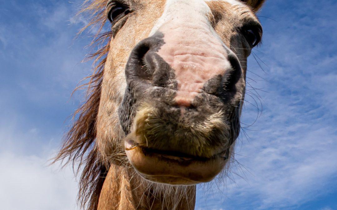 En ny guide till hjälp vid häststallens miljöskydd