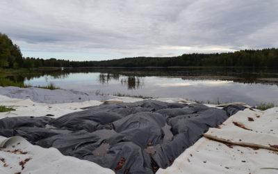 Bekämpning av den invasiva arten jättegröe testas genom täckning med presenningar i Hiidenvesi sjö