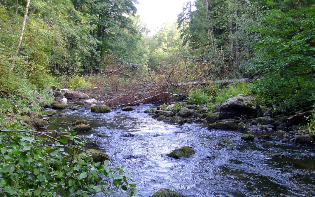 Länsi-Uudenmaan vesi ja ympäristö ry etsii vuoden 2020 vesien-/ympäristönsuojelijaa