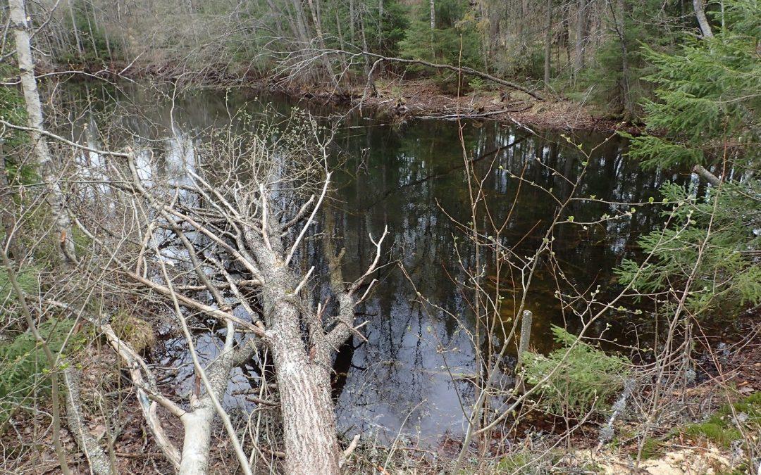 Grundvattnet är av god kvalitet i vattentäkterna i Högfors